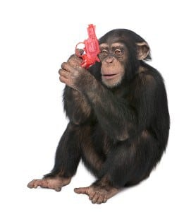 bigstock_Young_Chimpanzee_Playing_With__5081746